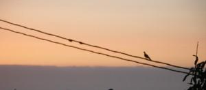 Vogel auf Stromleitung vor Sonnenuntergang