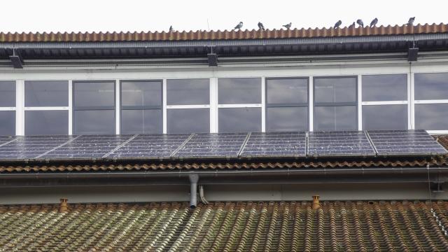 Taubendreck auf PV-Anlage